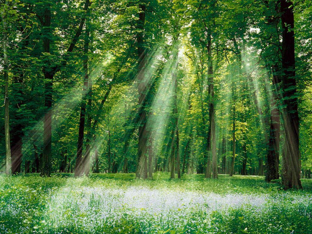 La nature, l'eau et la forêt au cœur de notre projet
